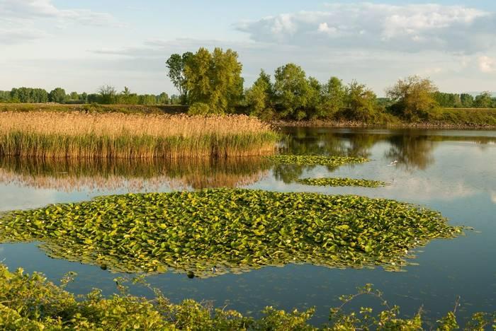 Lake Kerkini