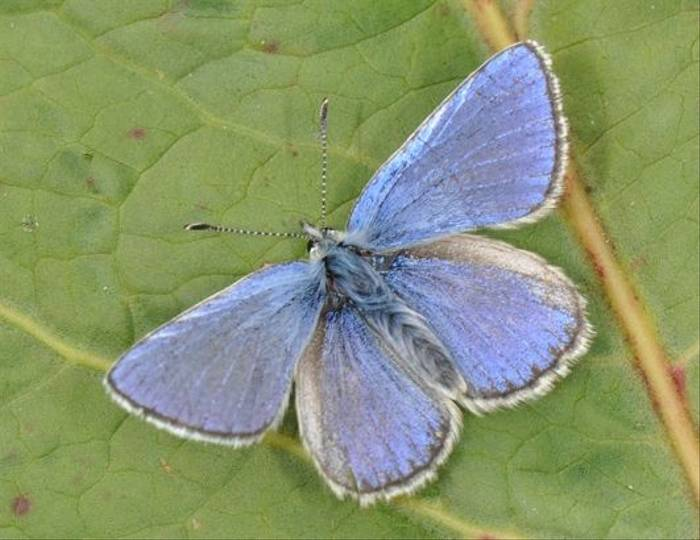 Alpine Blue (Matthew Gandy)