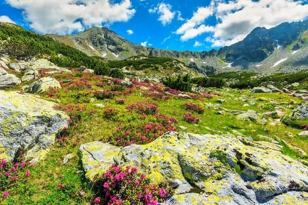 Carpathian Mountains, Transylvania, Romania Shutterstock 257196301