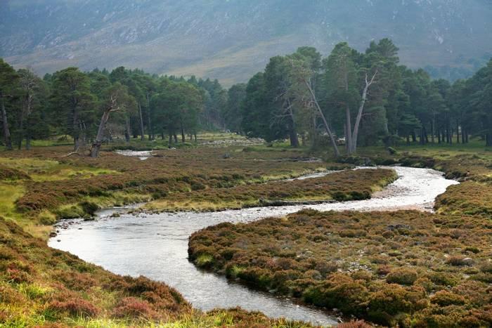 Caledonian forest, Cairngorms, Scotland shutterstock_69703252.jpg