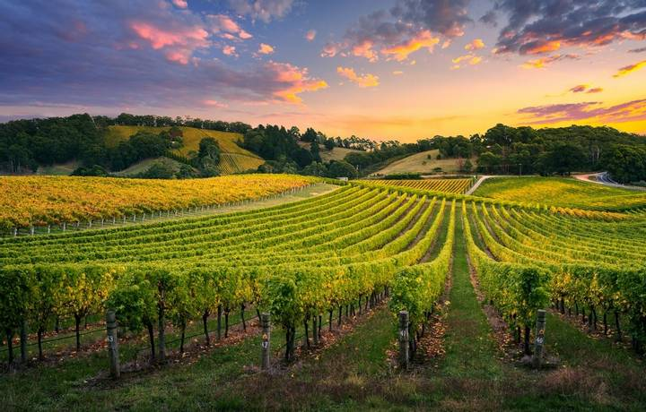 Beautiful Vineyard in the Adelaide Hills