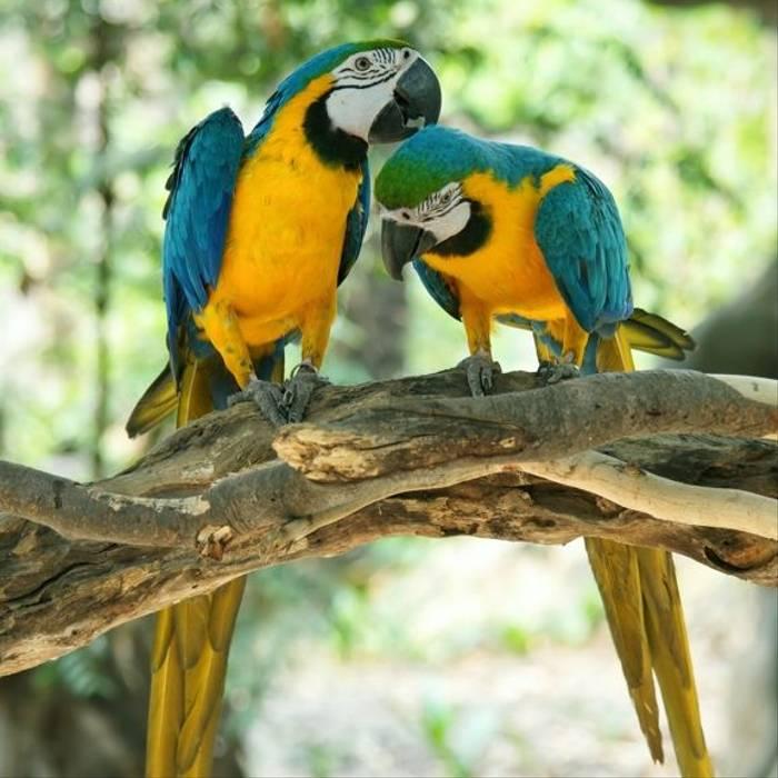 DesktopImages_Iguaza_Barbados_11.jpg