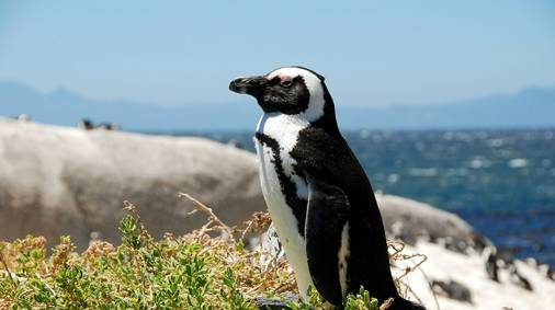 South Africa Cape & Garden Route Guided Walking Holiday