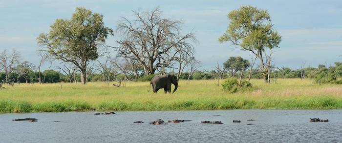 Elephant at riverside (Eric Browett)
