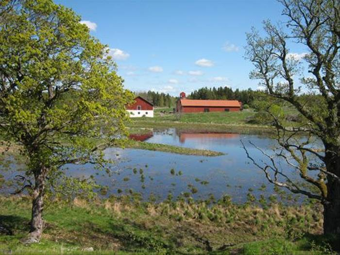 Wetland on Ängsö island (Daniel Green)