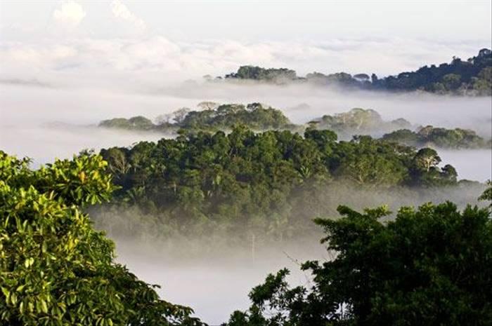 Soberania National Park (David Tipling)