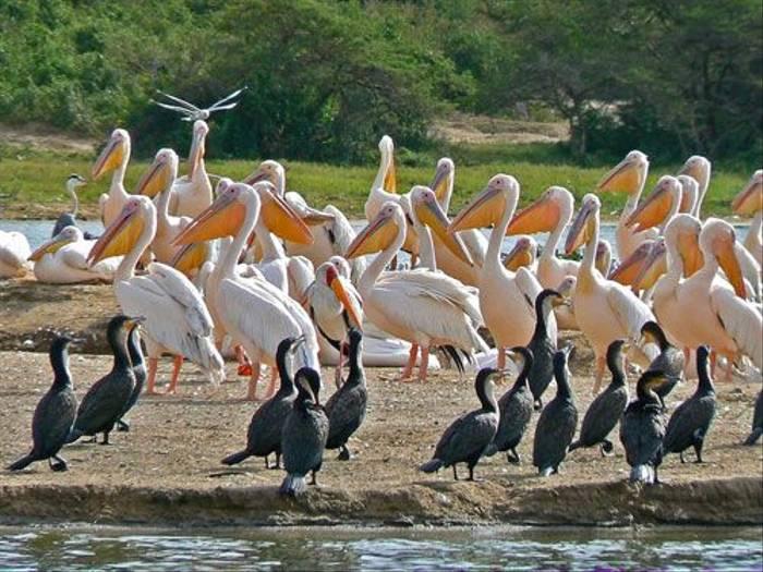 Birds in Queen Elizabeth NP (Tom McJannet)
