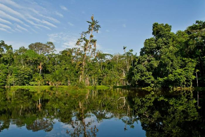Yasuni National Park, Orellana, Ecuador shutterstock_302726750.jpg