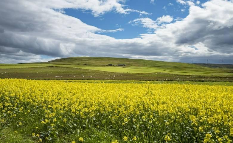 Orkney & Shetland - Orkney - AdobeStock_89805129.jpeg