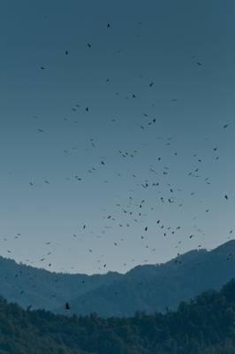 Raptor Migration Over Black Sea Cost, Georgia Shutterstock 184915226