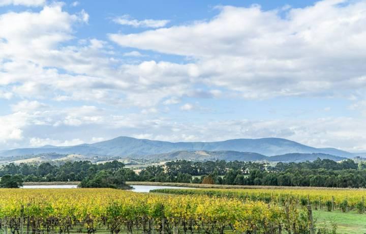 Picture is taken in 2018. It shows a wonderful winery in yarra valley in Australia.
