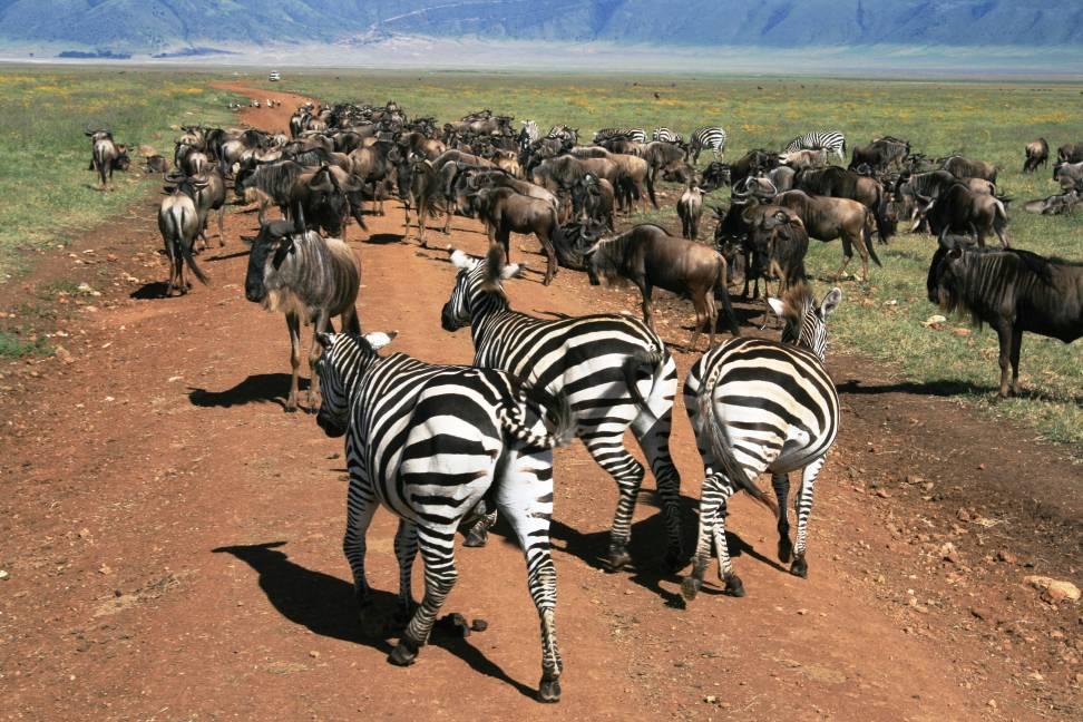 Wildebeest Migration on tour with Oasis Overland
