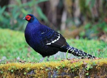 Taiwan - Endemics & Winter Birds