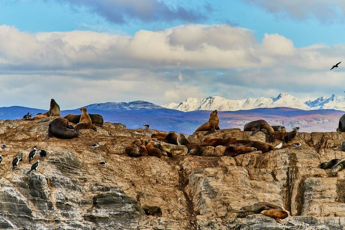 Sea lions and a bird on a small island in the Beagle Canal. Argentine Patagonia in Autumn