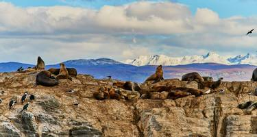 Sea lions on an island in the Beagle Canal. Argentine Patagonia in Autumn