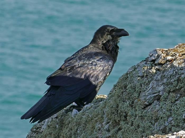 Raven (Mike Langman)