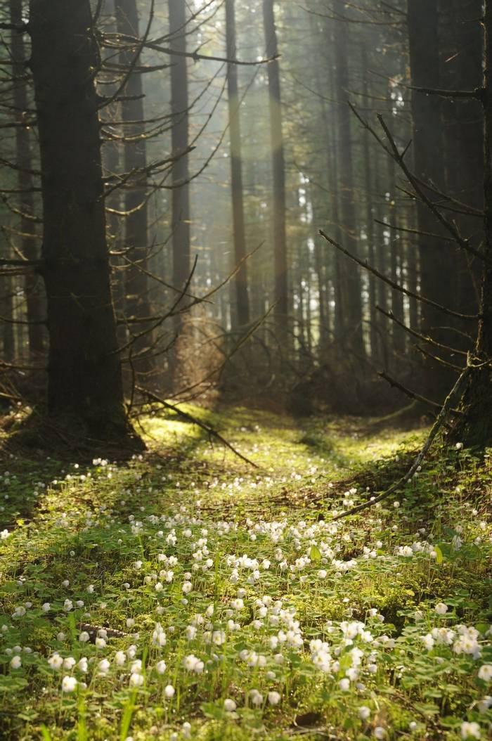 Woodland (David Morris)