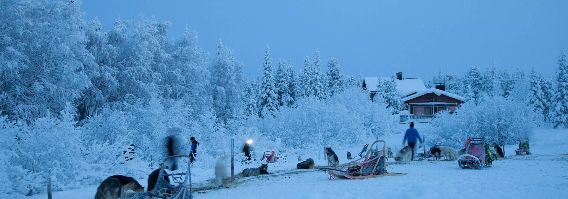 Please credit Antti Pietakainen 2012 (103).jpg