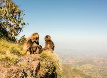 Tailormade Ethiopia