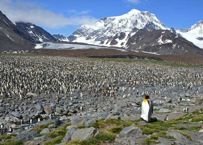 Penguin colony at St Andrews Bay, South Georgia, 30 Jan 2016