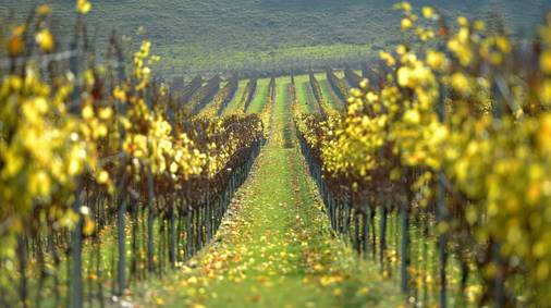Dorset Coast Vineyard & Wine Tasting Walks Holiday