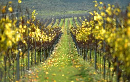 Dorset Coast Vineyard & Wine Tasting Walks Holiday