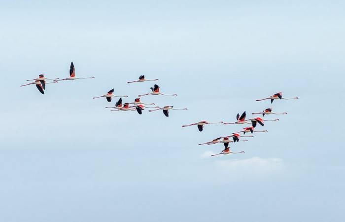 Flamingoes carmargue france shutterstock_279527621.jpg