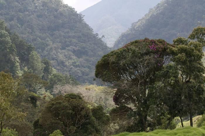 Valle De Cocora (Robin Smith)