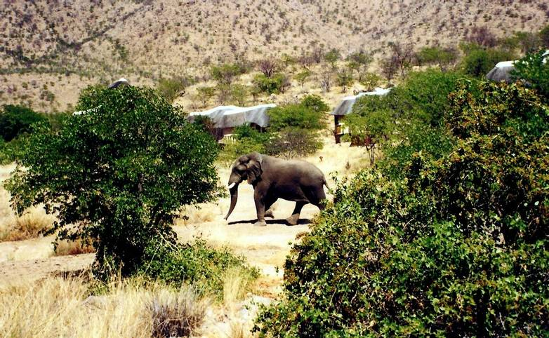 Namibia - Huab Lodge - Elephant in Backyard - Agent Photo.jpg