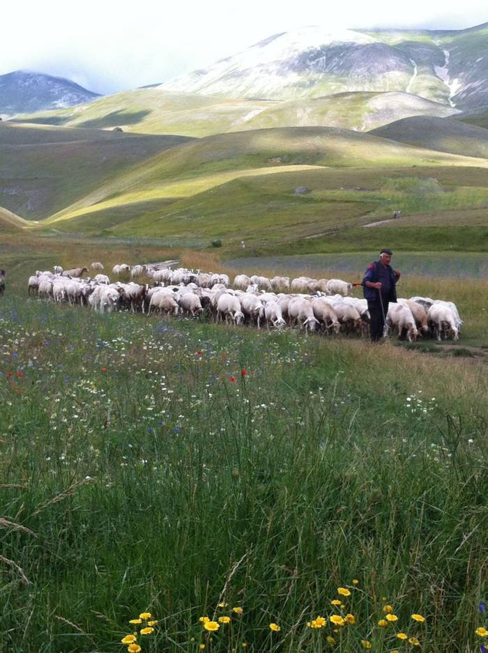 Shepherd in Sibilini National Park (Philip Thompson)