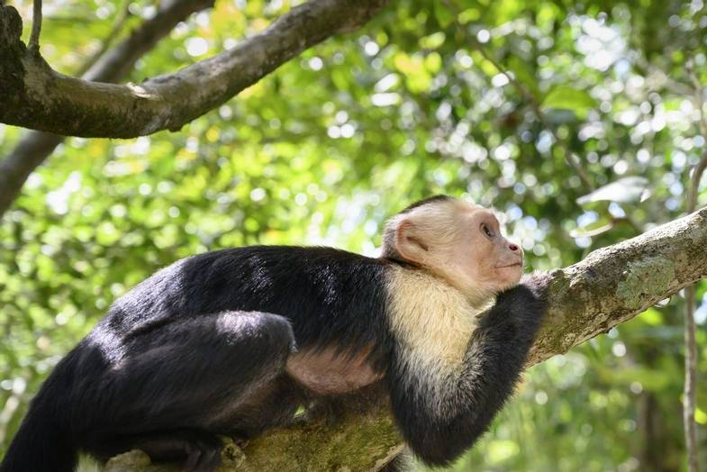 lapazul-retreat-monkey.jpg