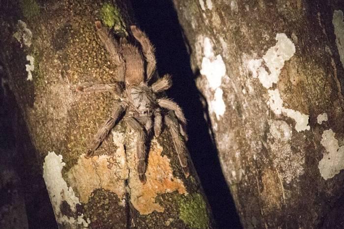 Tarantula (Lee Morgan)