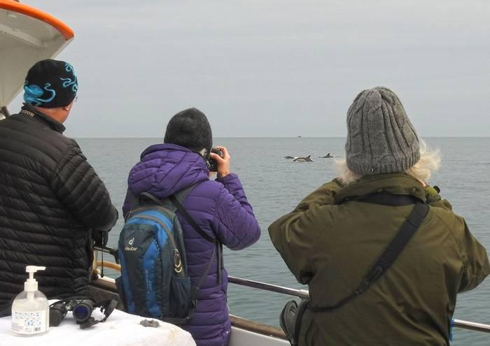 Tor Bay Boat Trip (Mike Langman).jpg