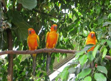 Tailormade Guyana