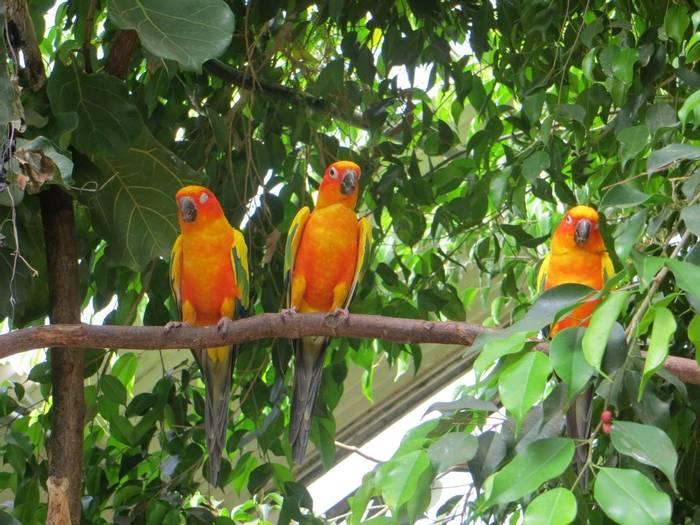 Sun Parakeets, Guyana shutterstock_763268674.jpg