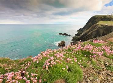 Shetland's Wildlife