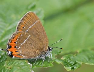 Flora and Butterflies of East Sussex