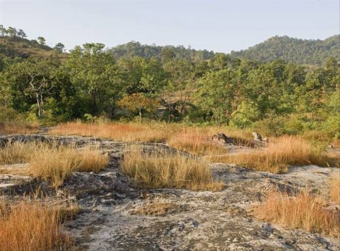 Bandhavgarh National Park (Paul Marshall)