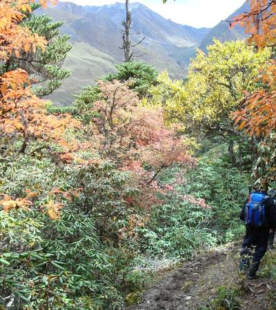 Autumnal colours below Gombu La (4,400m)