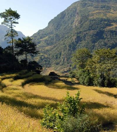 Terraced fields near Macha Khola (930m)