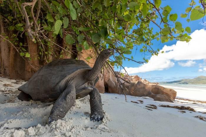 Aldabra Giant Tortoise, Seychelles Shutterstock 1103086625