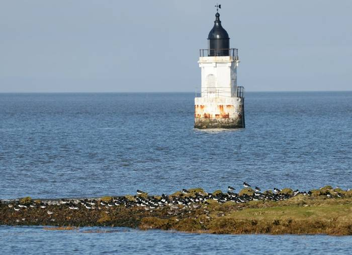 Cockersands Lighthouse and roosting waders Barrie Cooper.jpg