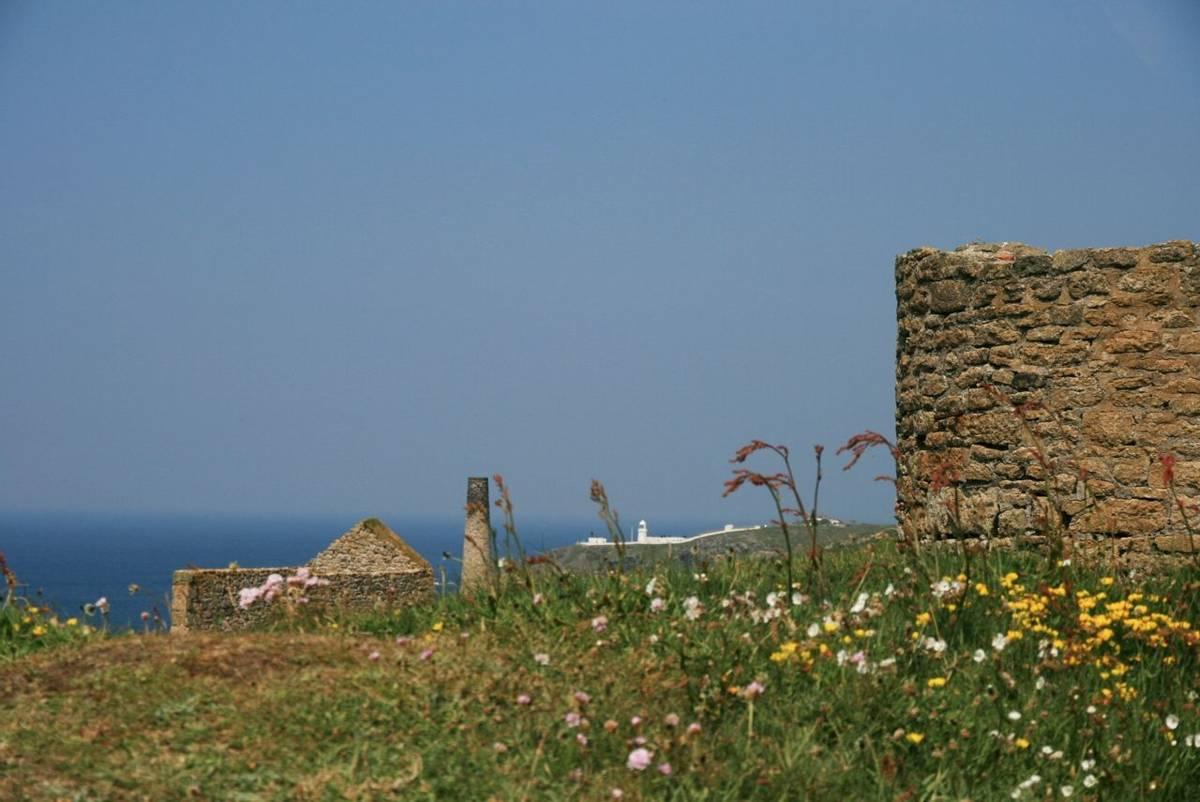 Wild_Flowers_Tin_Mine_Cornwall.jpg