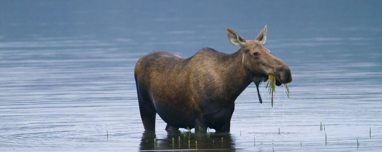 © State of Alaska Michael DeYoung Denali National Park Interior.jpg