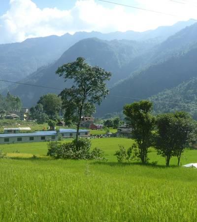 Fields near Besisahar (760m)