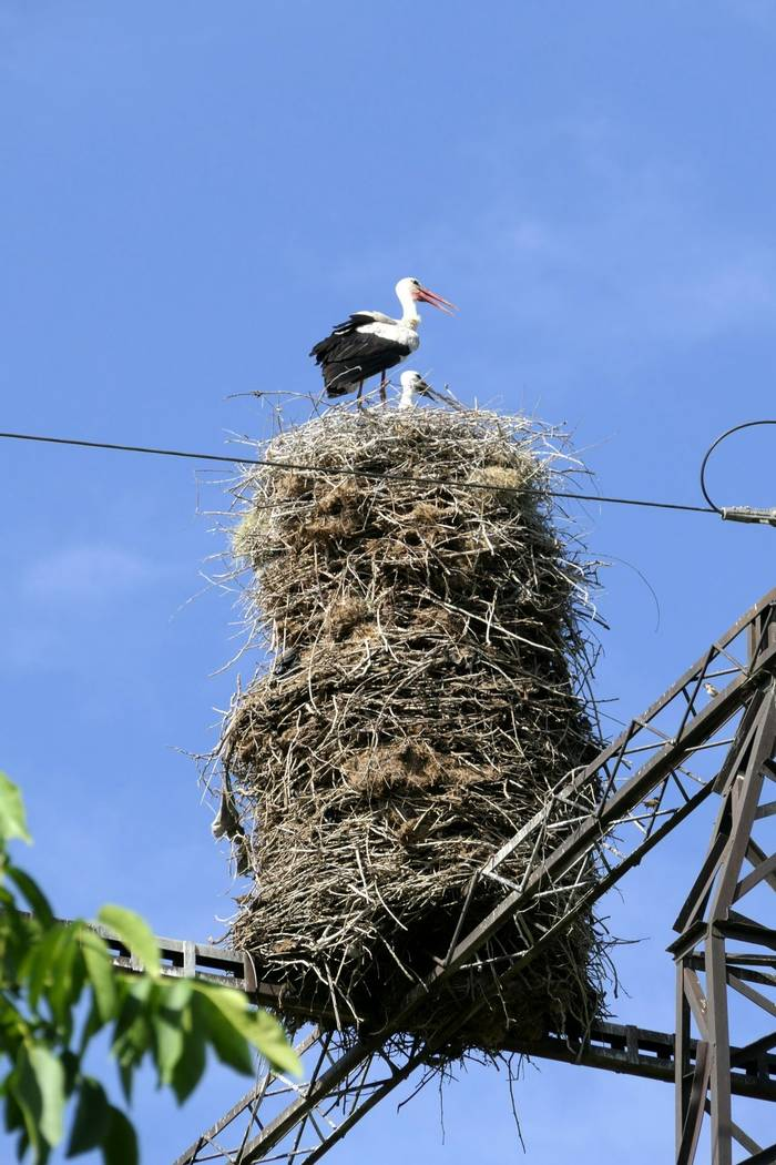 White Stork Nest by Clive Pickton