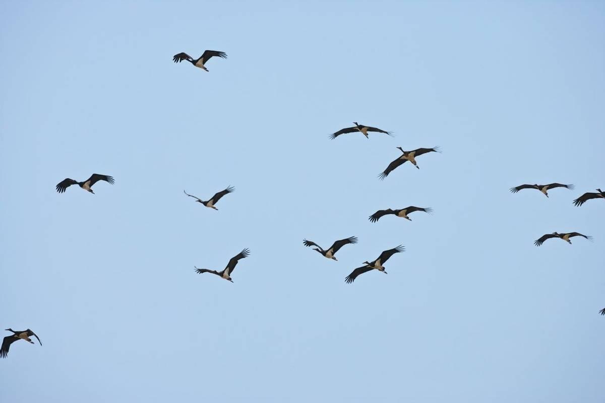 Black Stork Shutterstock 1013718511