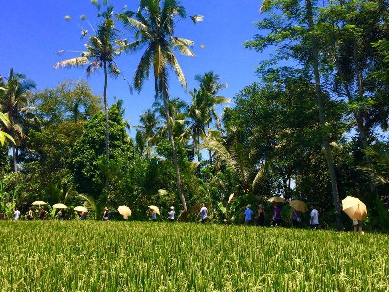 Bali discover hike jungle